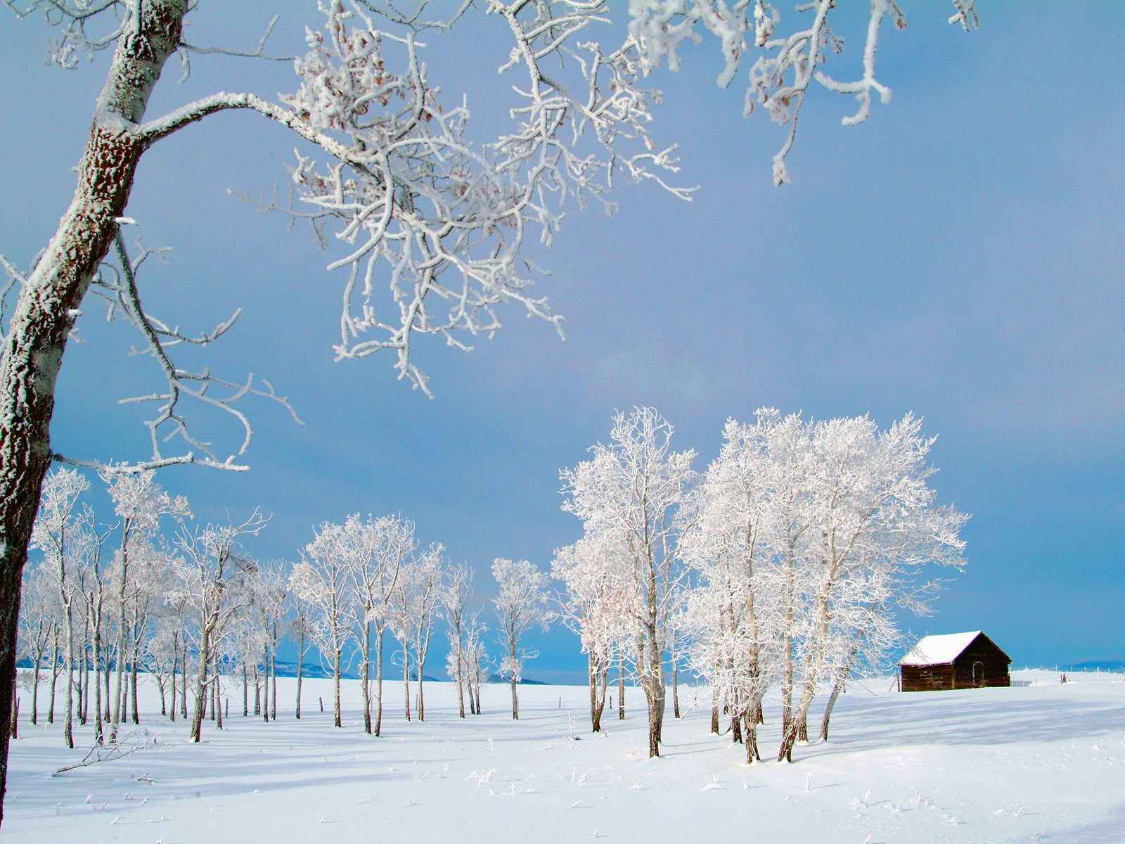 Winter Wallpaper 039
