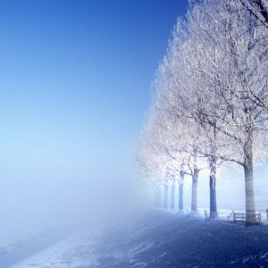 Winter Wallpaper 052