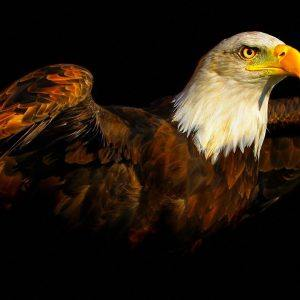 Eagle Wallpaper 35