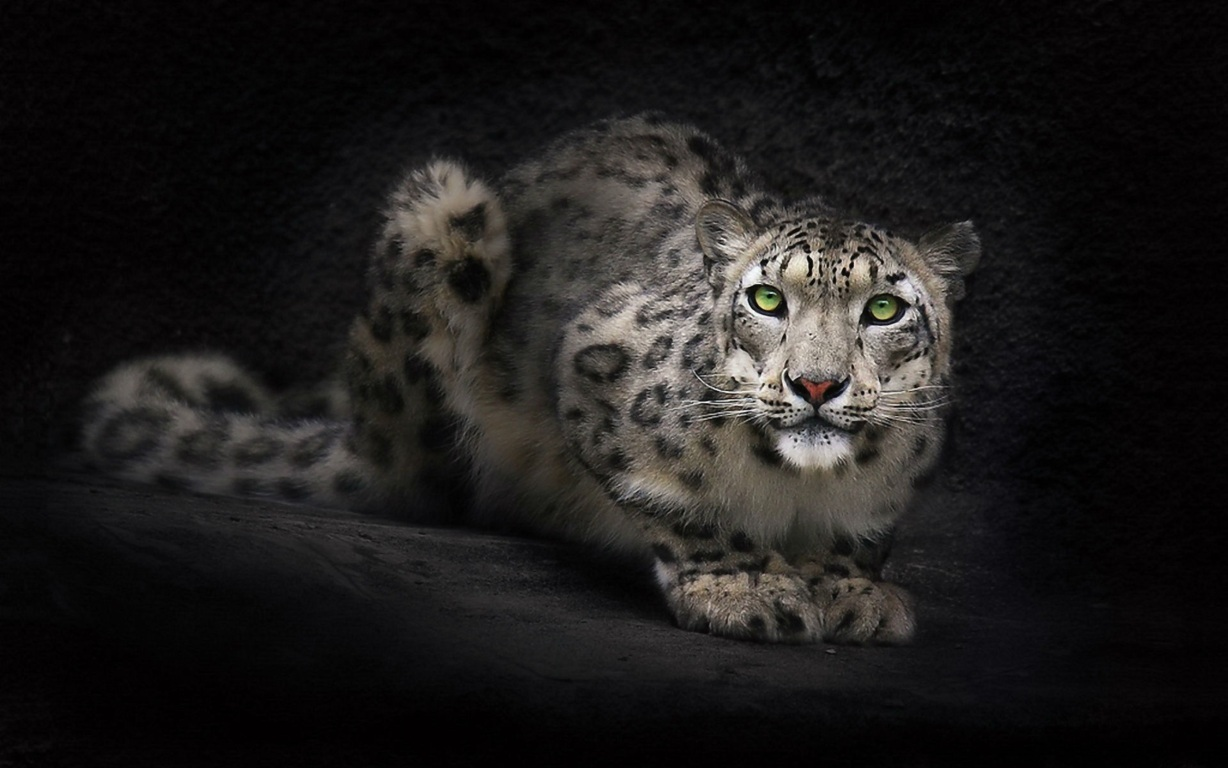 Leopar Wallpaper 22