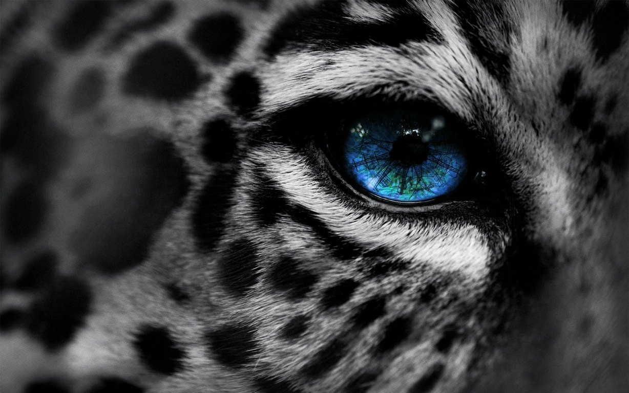Leopar Wallpaper 3