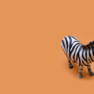 Zebra Wallpaper 11 300x300