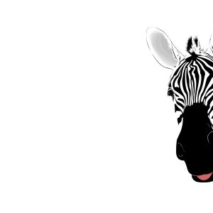 Zebra Wallpaper 17 300x300