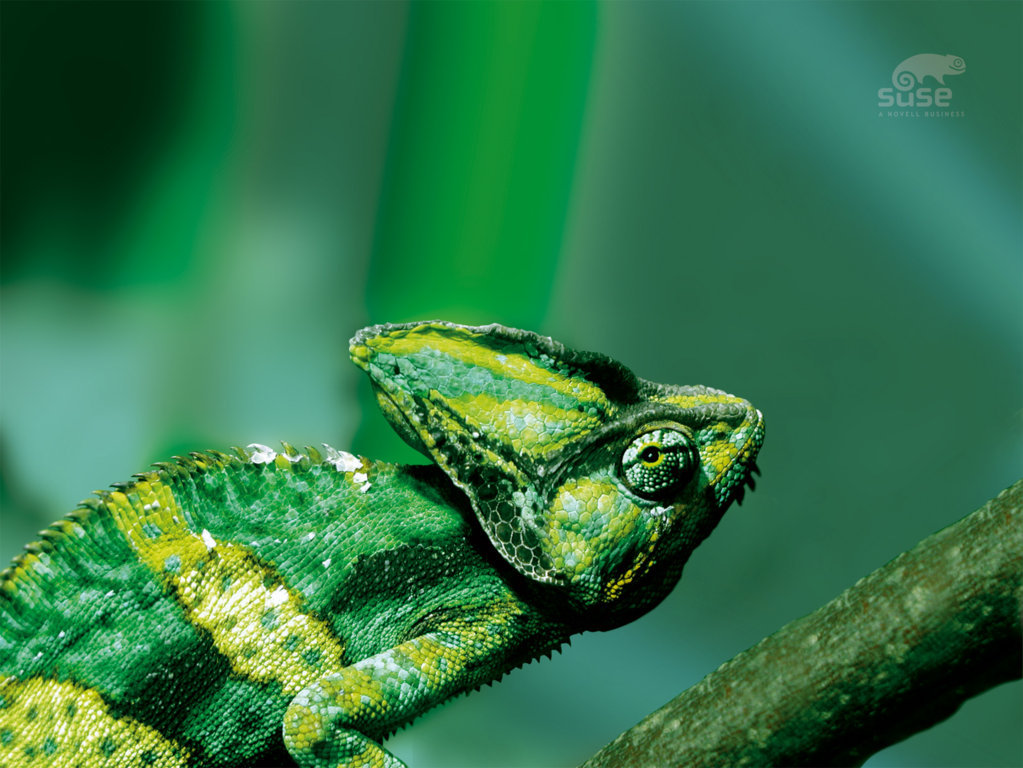 SUSE Linux Wallpaper 3