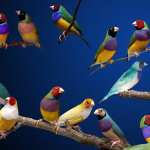 Bird Wallpaper 040