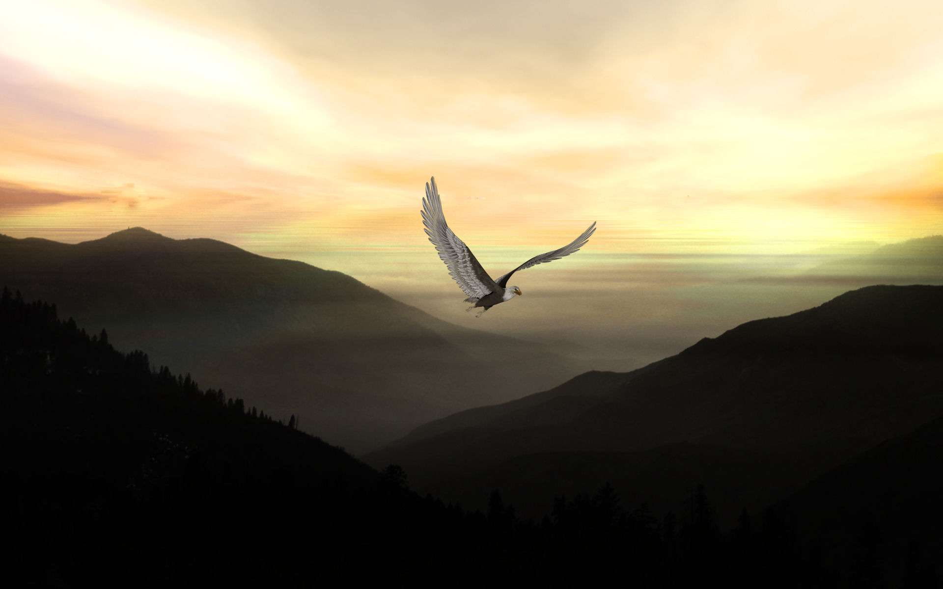 Bird Wallpaper 043