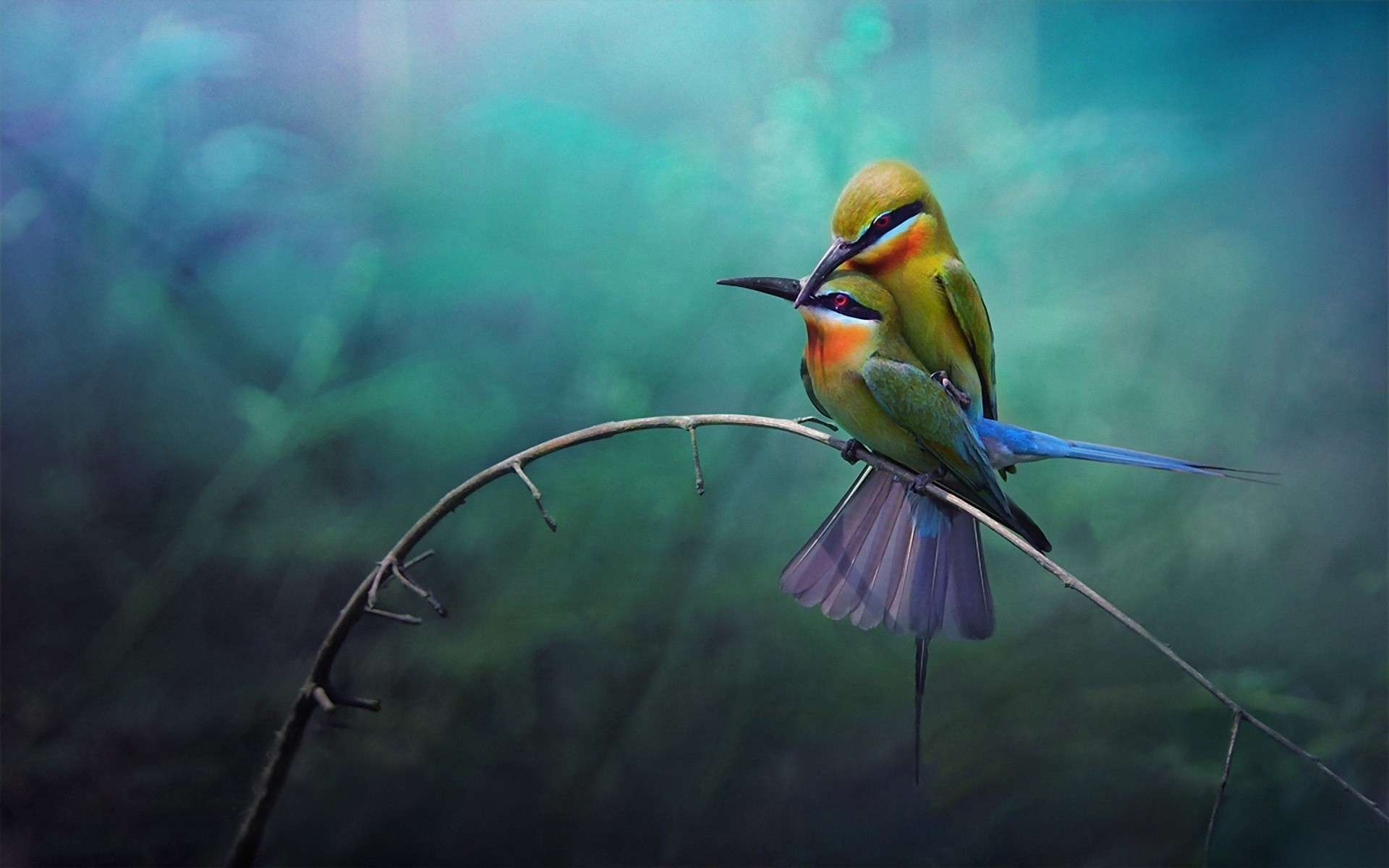 Bird Wallpaper 049