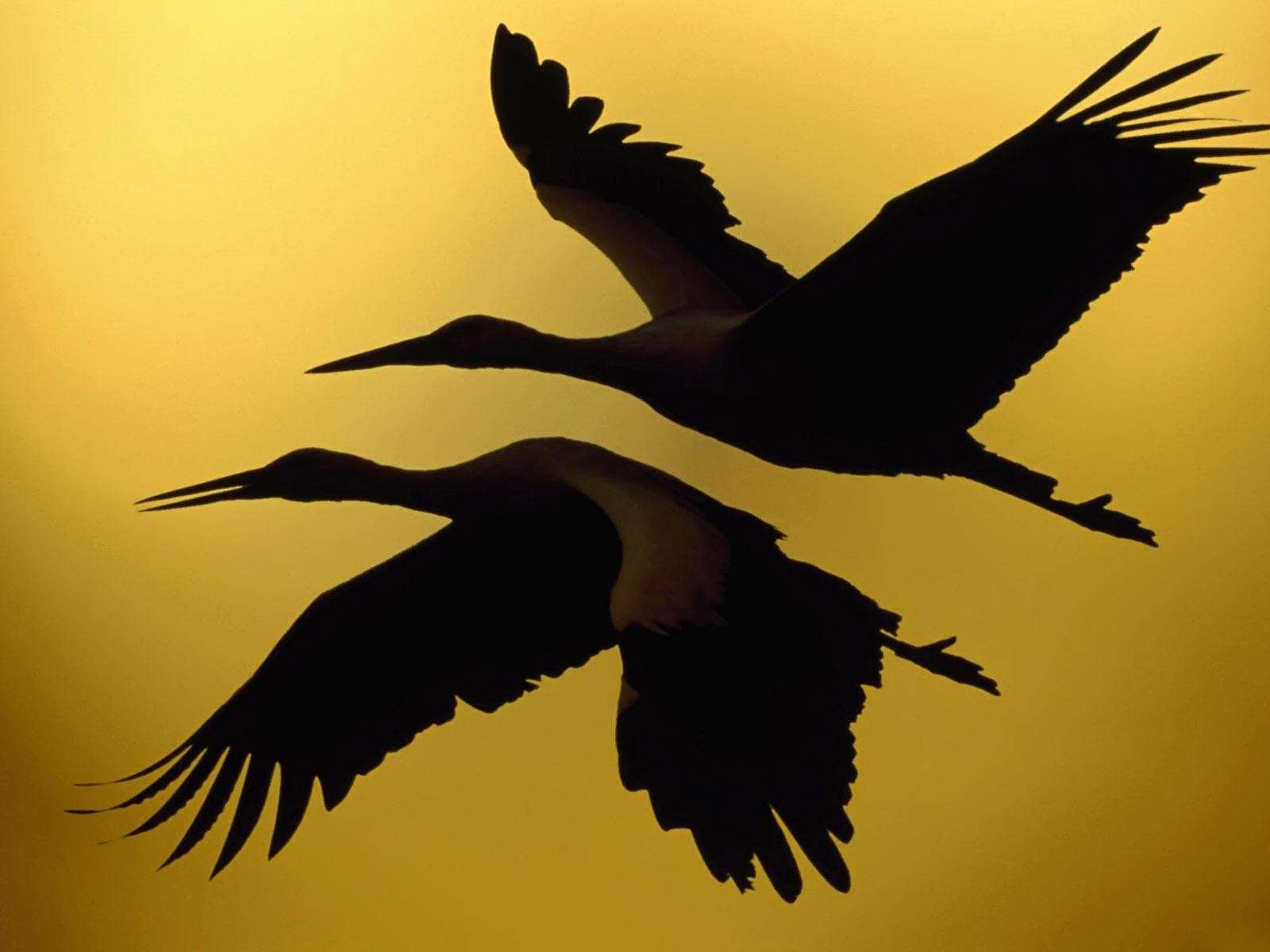 Bird Wallpaper 078