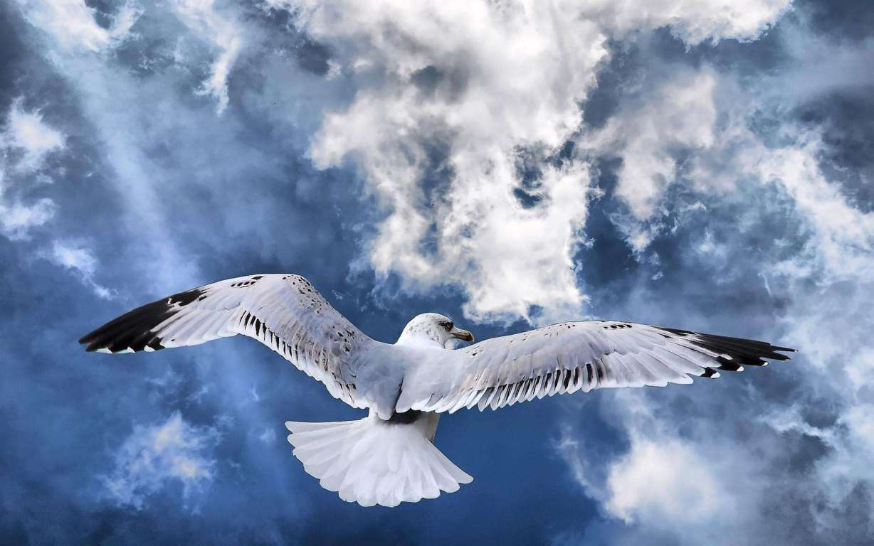 Bird Wallpaper 110