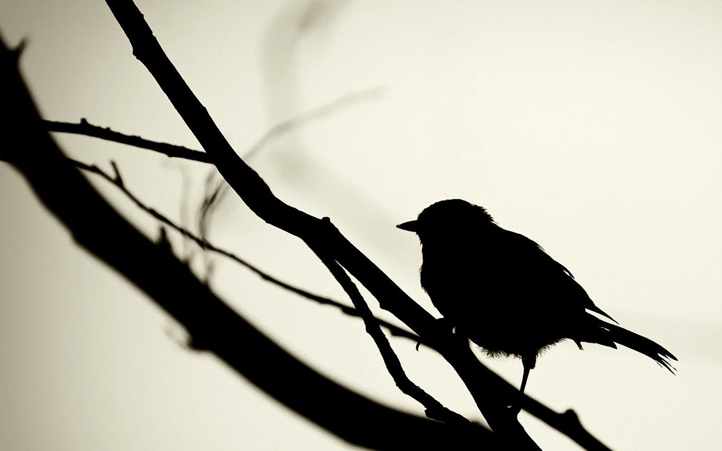 Bird Wallpaper 119