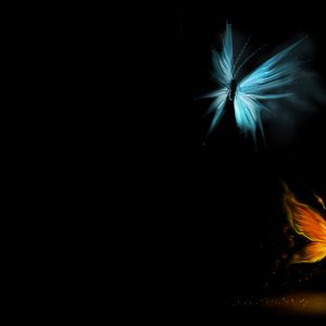 Butterfly Wallpaper 008 300x300
