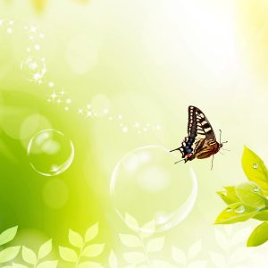 Butterfly Wallpaper 015