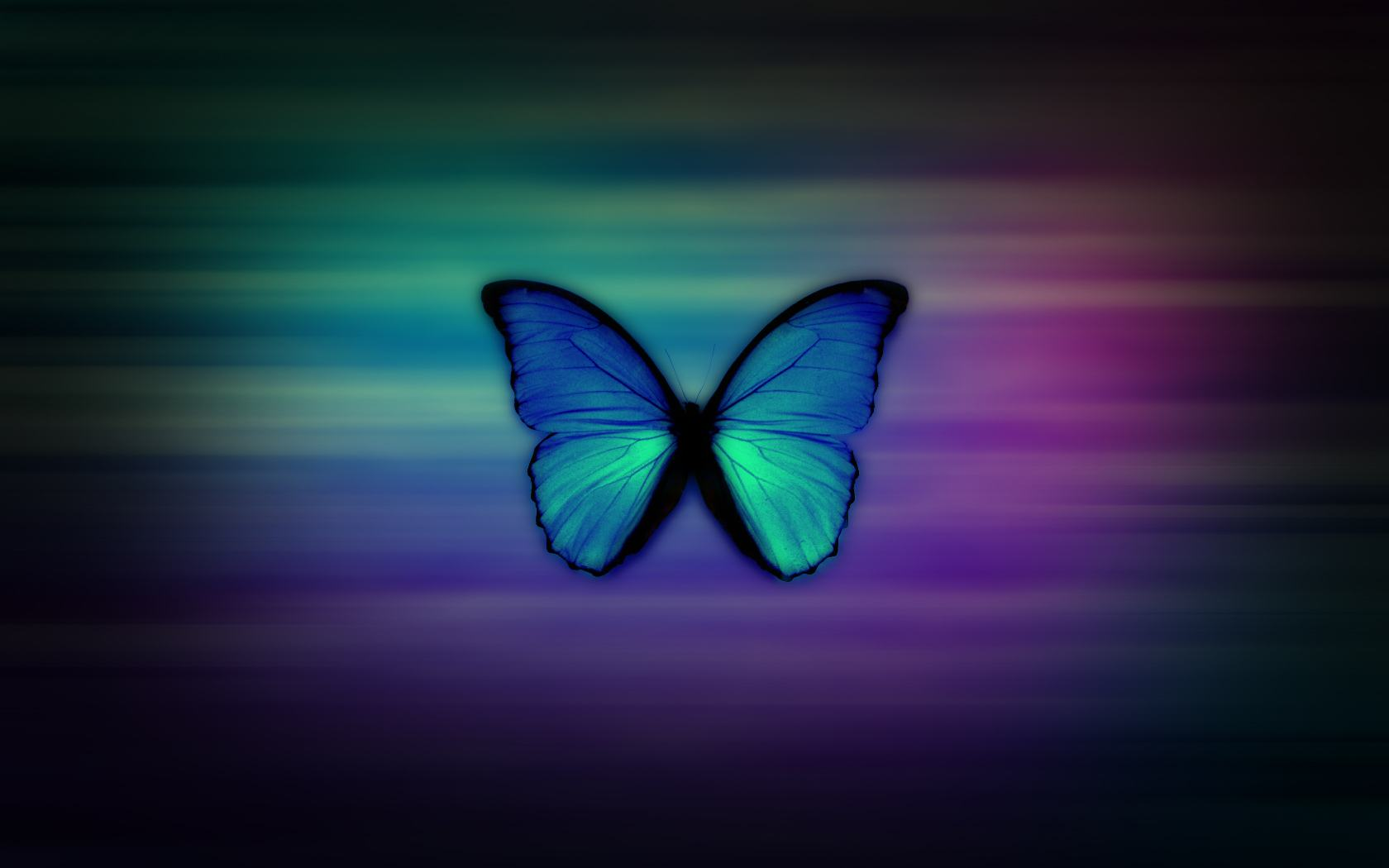 Butterfly Wallpaper 022