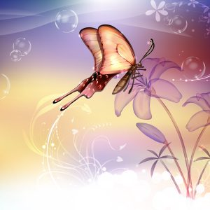 Butterfly Wallpaper 037