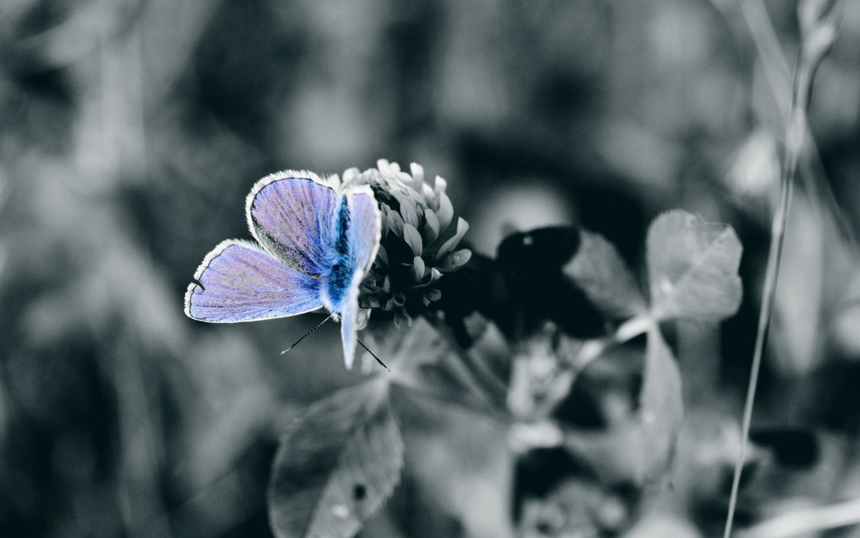 Butterfly Wallpaper 039