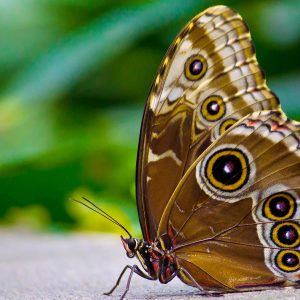 Butterfly Wallpaper 049