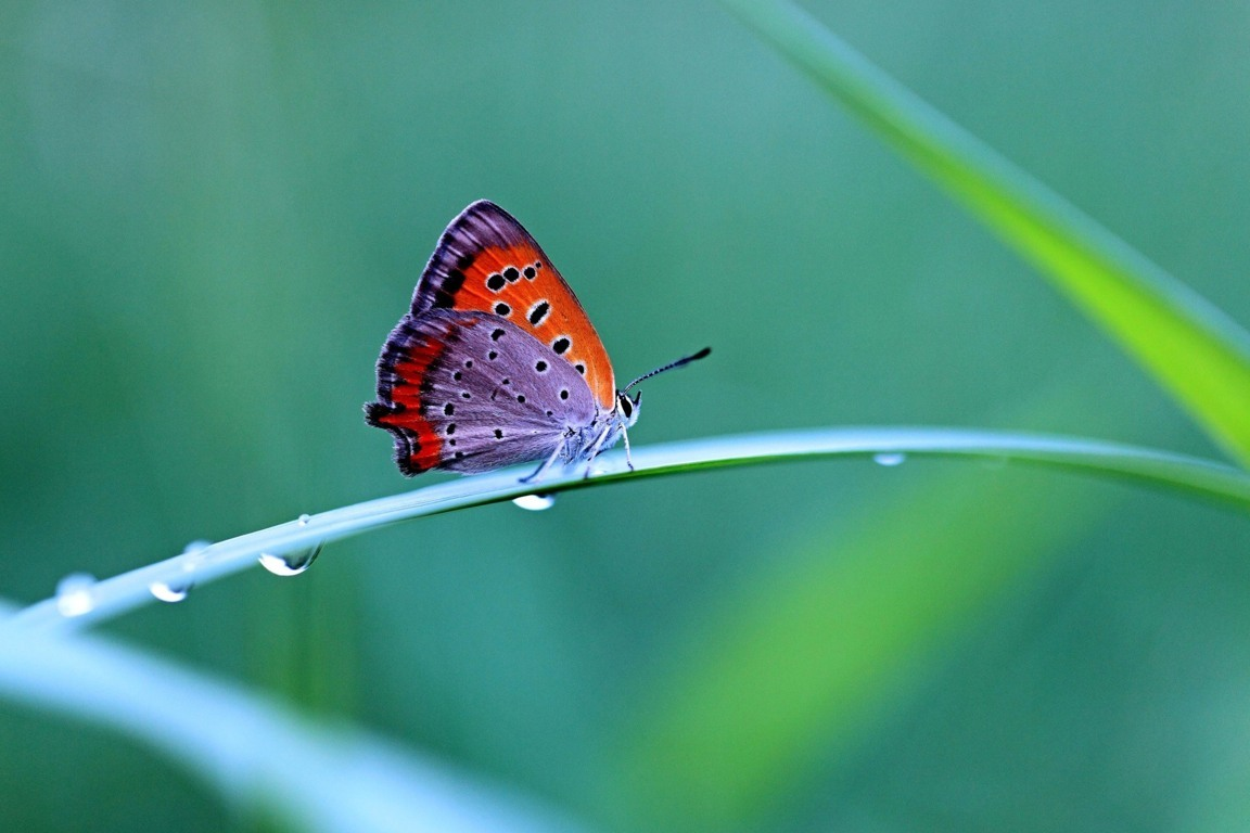 Butterfly Wallpaper 057