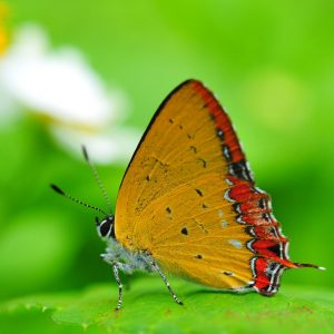 Butterfly Wallpaper 058 300x300