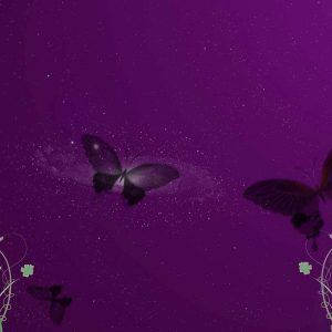Butterfly Wallpaper 064 300x300