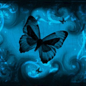 Butterfly Wallpaper 068 300x300
