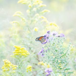 Butterfly Wallpaper 070 300x300