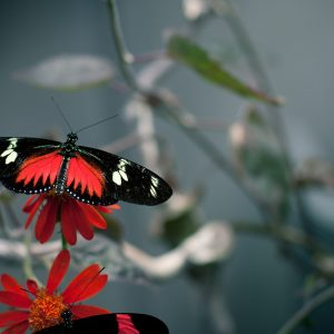 Butterfly Wallpaper 074 300x300