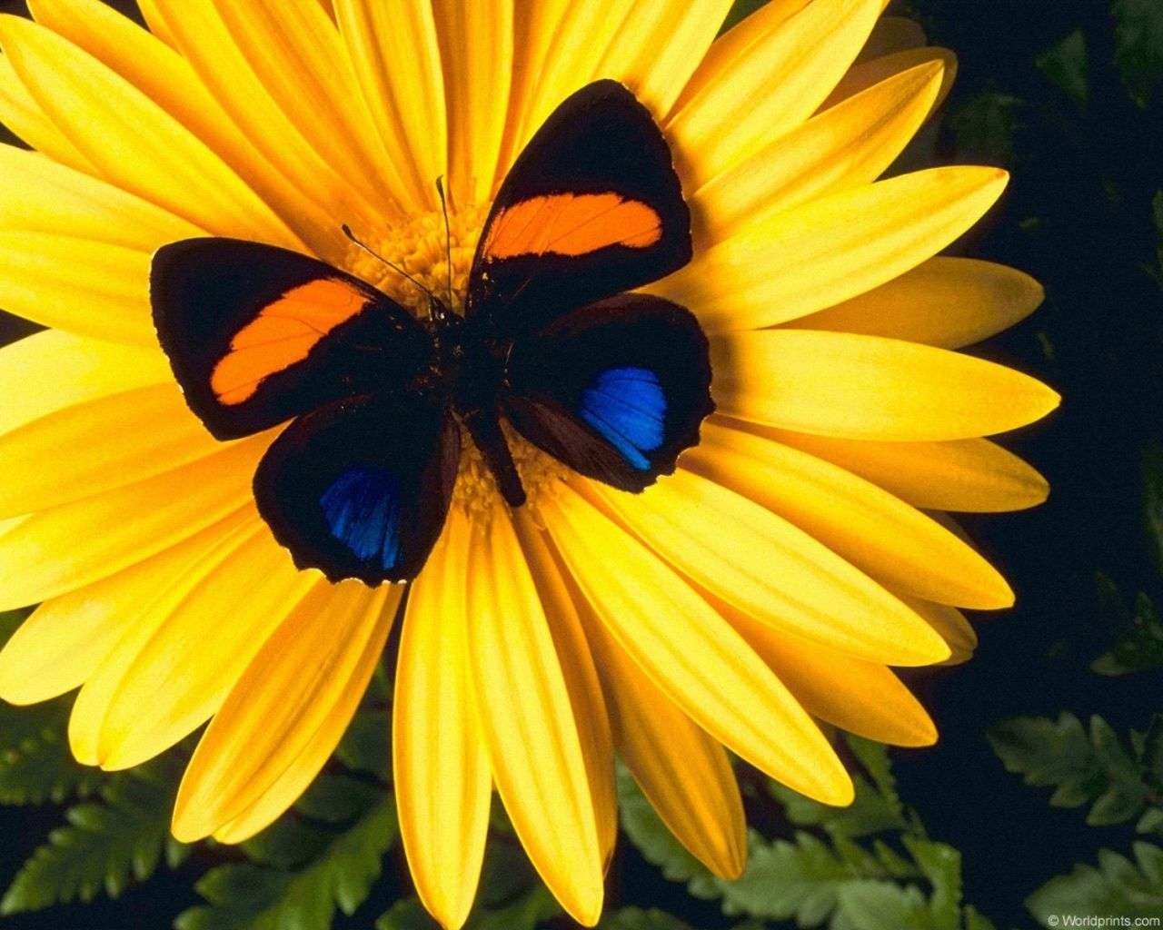 Butterfly Wallpaper 076