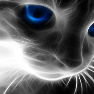 Cat Wallpaper 020 300x300
