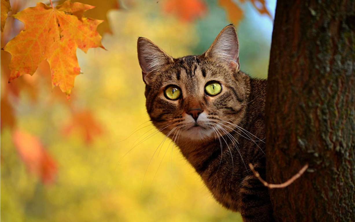 Cat Wallpaper 028