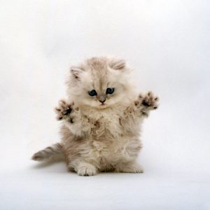 Cat Wallpaper 048 300x300