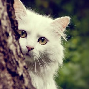Cat Wallpaper 049 300x300
