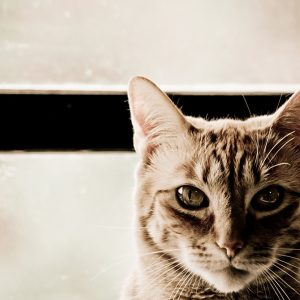 Cat Wallpaper 081 300x300