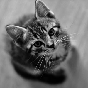 Cat Wallpaper 086 300x300