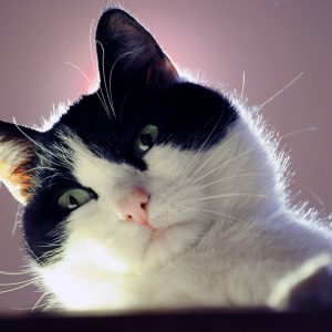 Cat Wallpaper 087 300x300