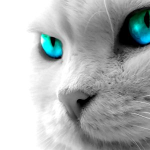 Cat Wallpaper 092 300x300
