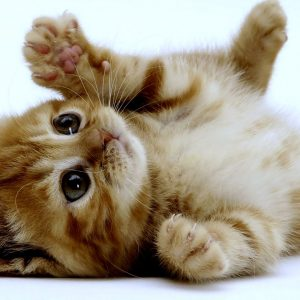 Cat Wallpaper 096 300x300