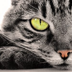 Cat Wallpaper 098 300x300