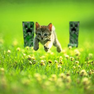 Cat Wallpaper 103