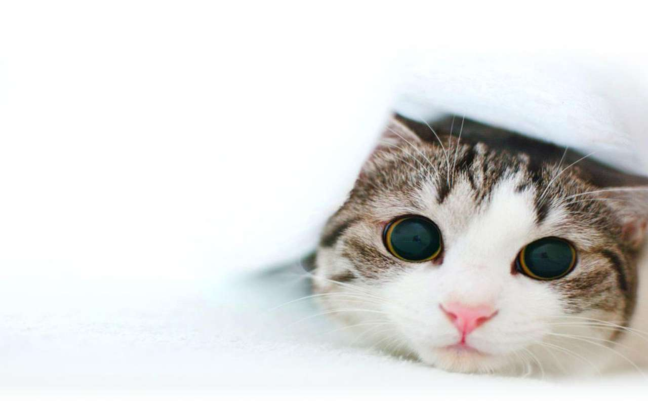Cat Wallpaper 128