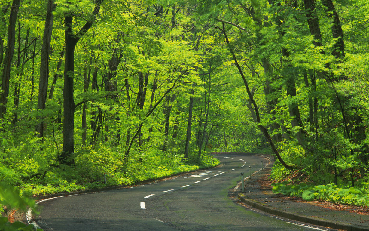 Road Wallpaper 127