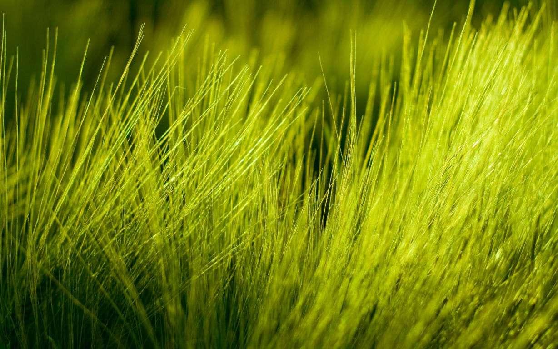 Green Wallpaper 004