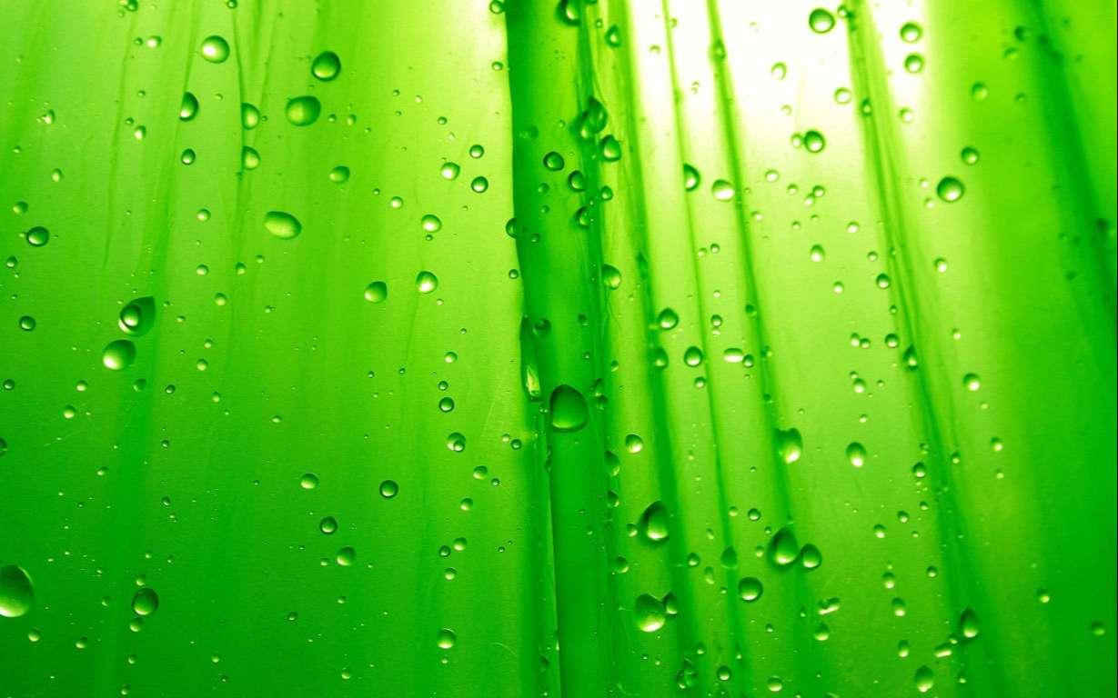 Green Wallpaper 008