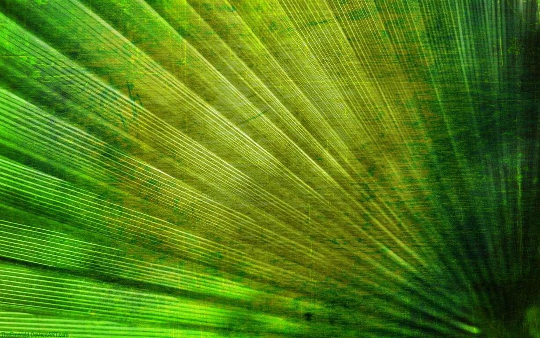 Green Wallpaper 011