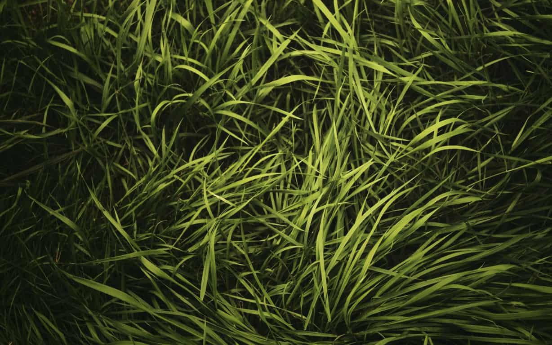 Green Wallpaper 022