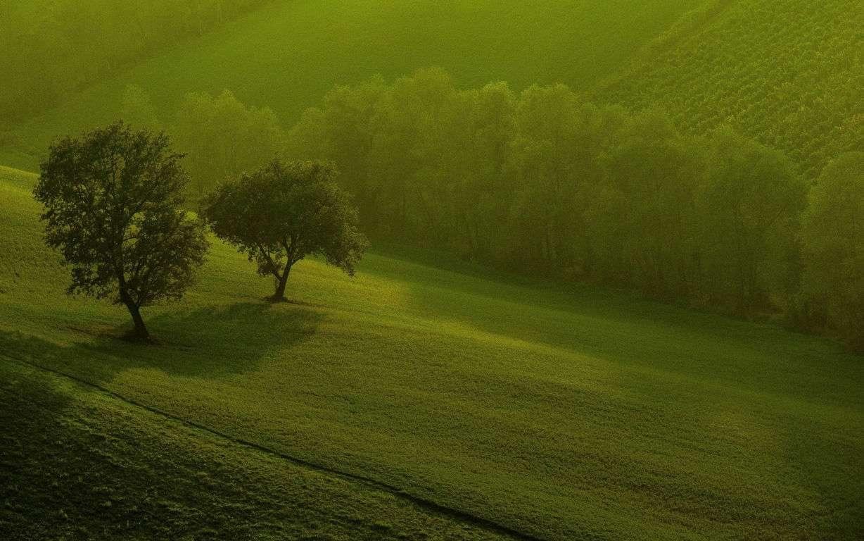 Green Wallpaper 048