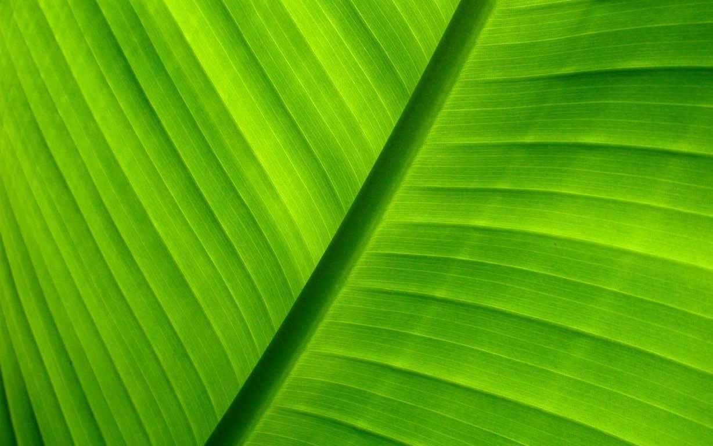 Green Wallpaper 059