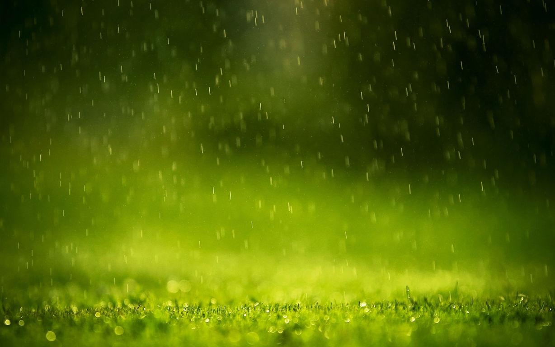 Green Wallpaper 099