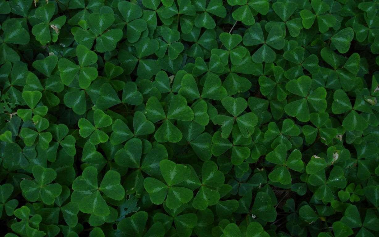 Green Wallpaper 105