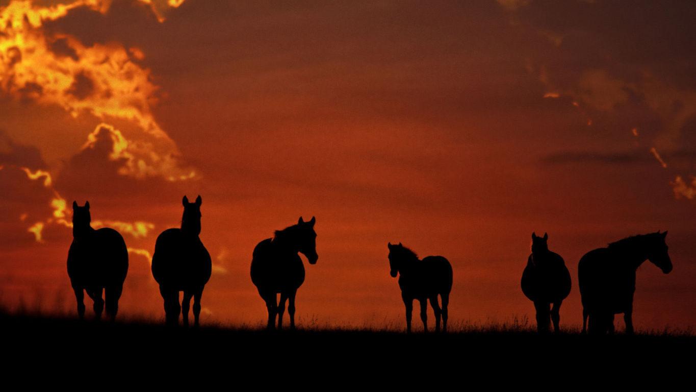 Horse Wallpaper 011