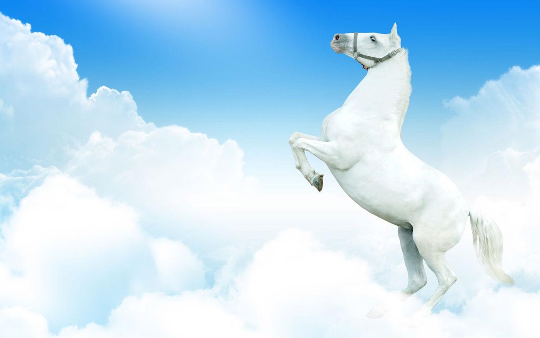 Horse Wallpaper 012